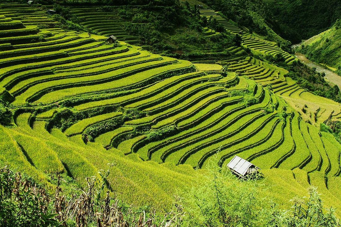 Рисові тераси в Му Кан Чай