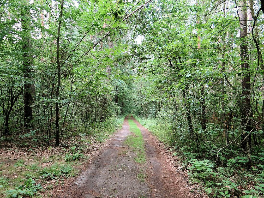 Ландшафтний парк Болімув