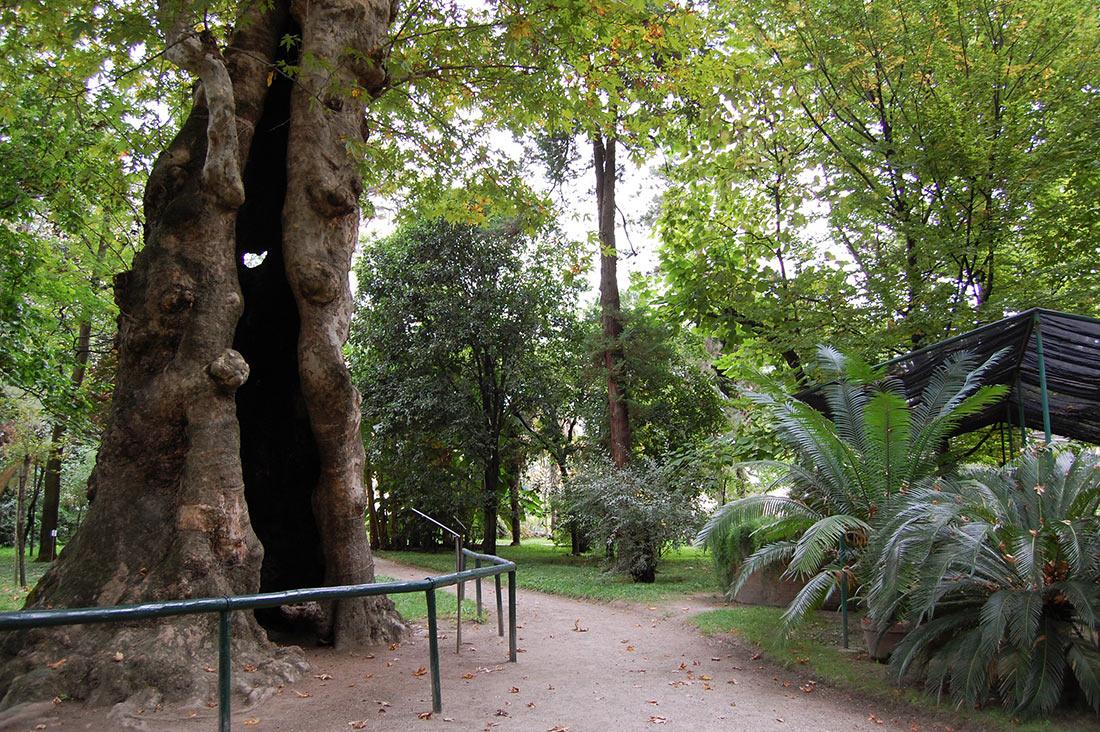 Ботанічний сад Падуї