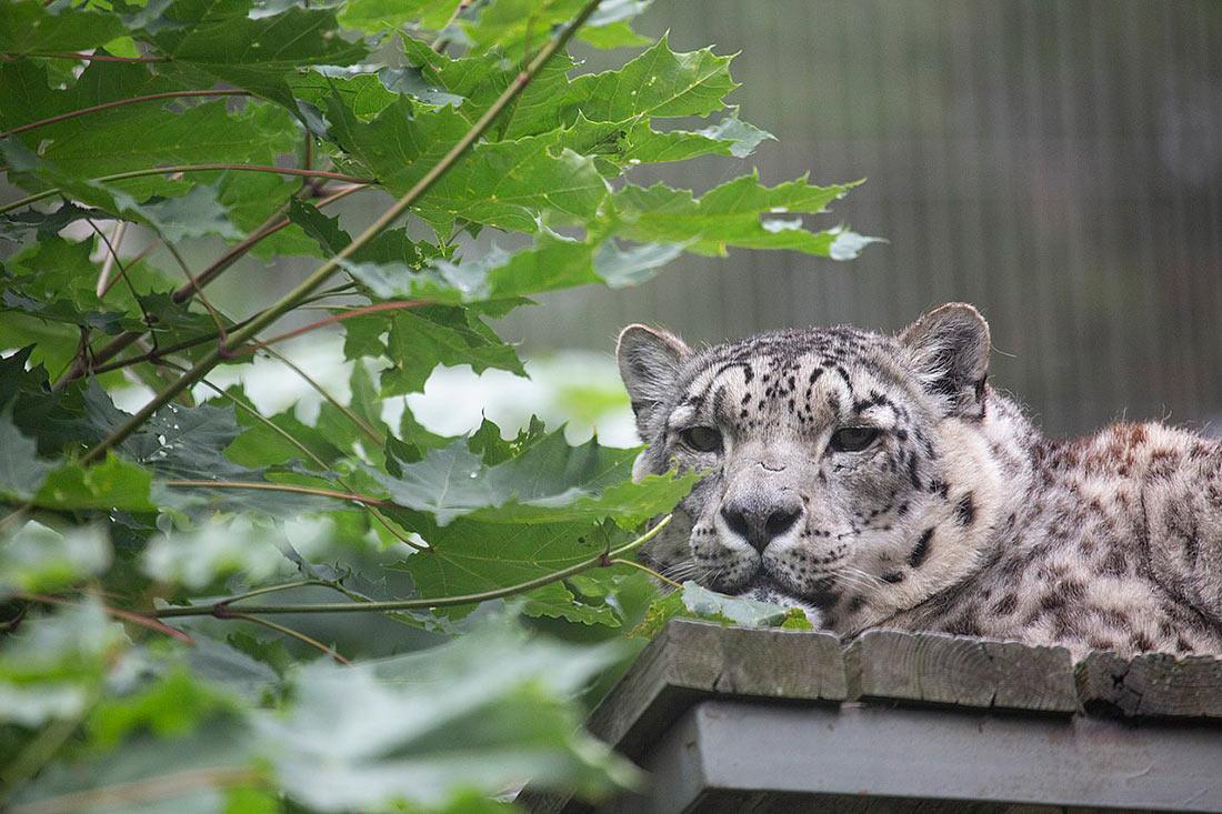 Гельсінський зоопарк